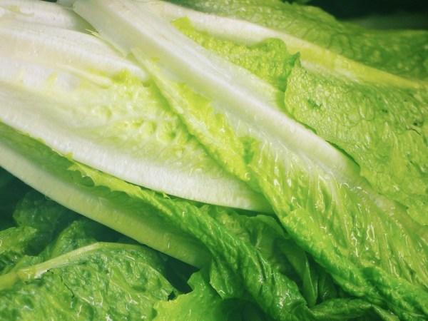 lettuce from shalavee.com