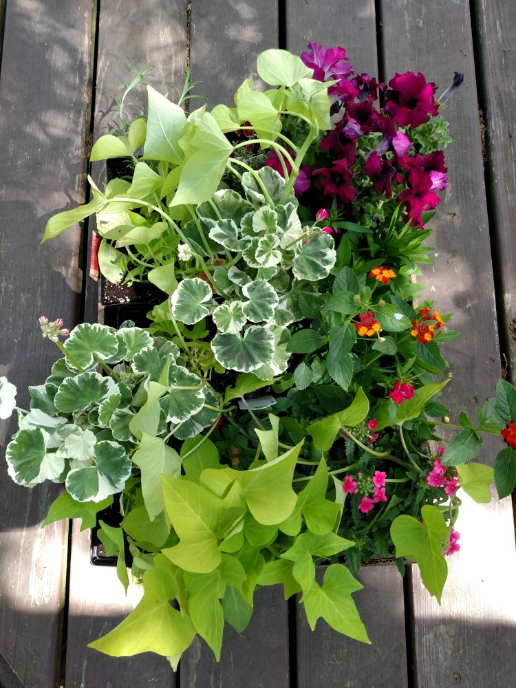 New plants to kill on Shalavee.com