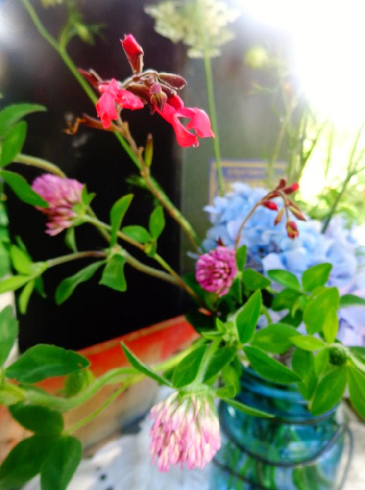 Purple clover too on Shalavee.com