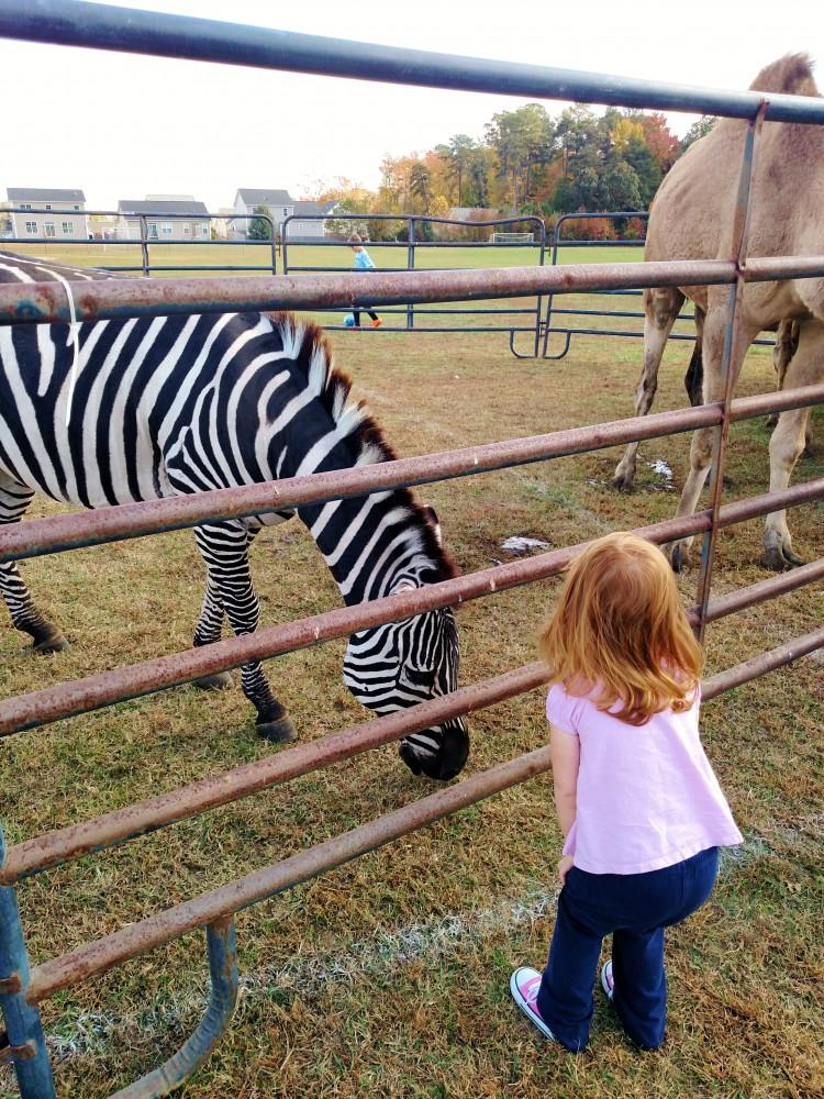 Fiona meets a zebra on Shalavee.com