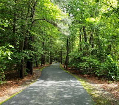 A Walk in the Woods for a Little Forest Bathing on Shalavee.com