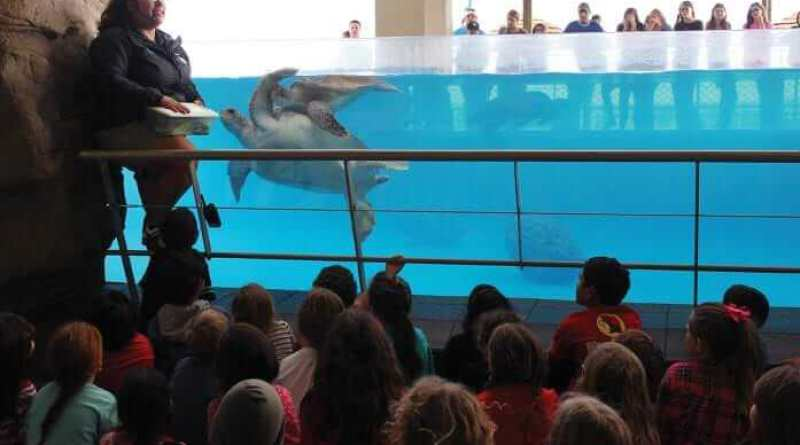 Texas State Aquarium gives exhibit to homeschooled class