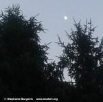 2 pines w moon w c