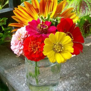 Vibrant Summer Zinnias in Mason Jar by Shalom Schultz