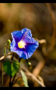 blue flower copy