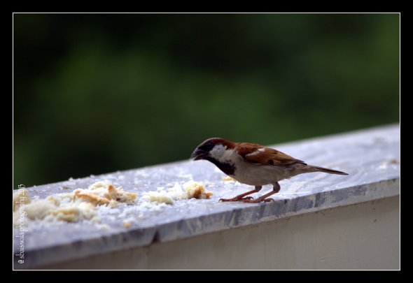 Tiny feathered ones came down to enjoy a treat on my kitchen balcony
