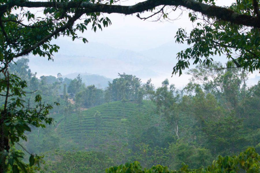 treehouse-kerela-vythiri-resort-wayanad-india-coffeplantation-travel