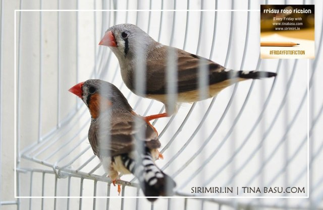 #fridayphotofiction-s momex-traffic-women-kidnap-caged-birds-slavery