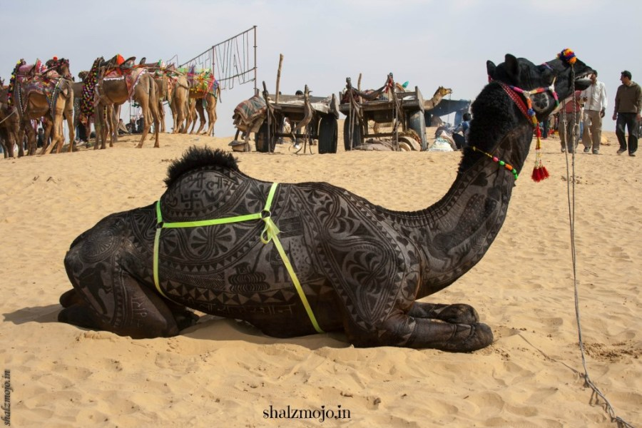 A2Z-BADGE-2017-blogging-challenge-theme-reveal-travel-stories-picture-speaks-louder-than-words-april-shalzmojosays-shekhawati-rajasthan-bikaner-camel-fair-bodyart-shearing-design-desert-sand-dunes-india-travel-woman-traveller