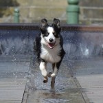 dog running with speed on water