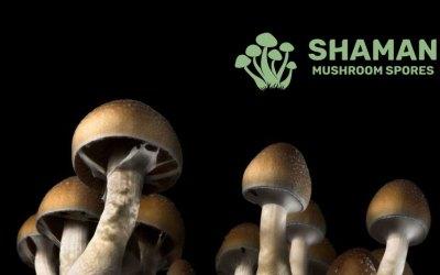 Shaman Mushroom Spores – About Us