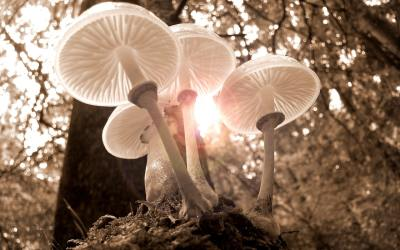 """Using the """"Magic"""" Mushrooms That Will Make Your Recipes Truly Special"""