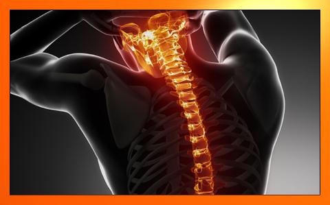 Midollo spinale e forza vitale