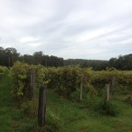Bago Vineyard