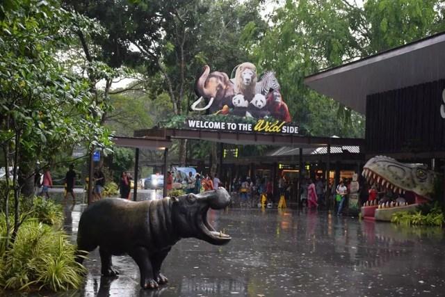 singapore-zoo-1