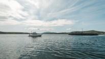 Bootstour auf den Spuren von Fugie, dem Delfin | Boat trip on the track of Fungie, the Dolphin