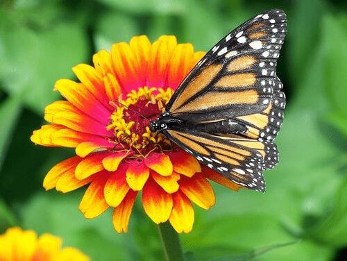 You Beautiful Butterfly!