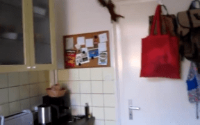 Squirrel makes a flying escape