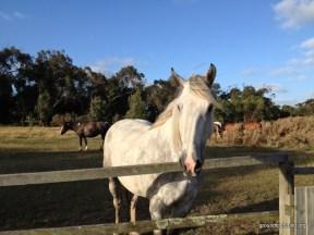 white-horse-4