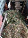 chooks inspect litter