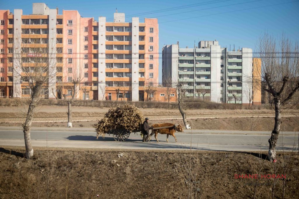 Farmer with Ox and cart, North Korea