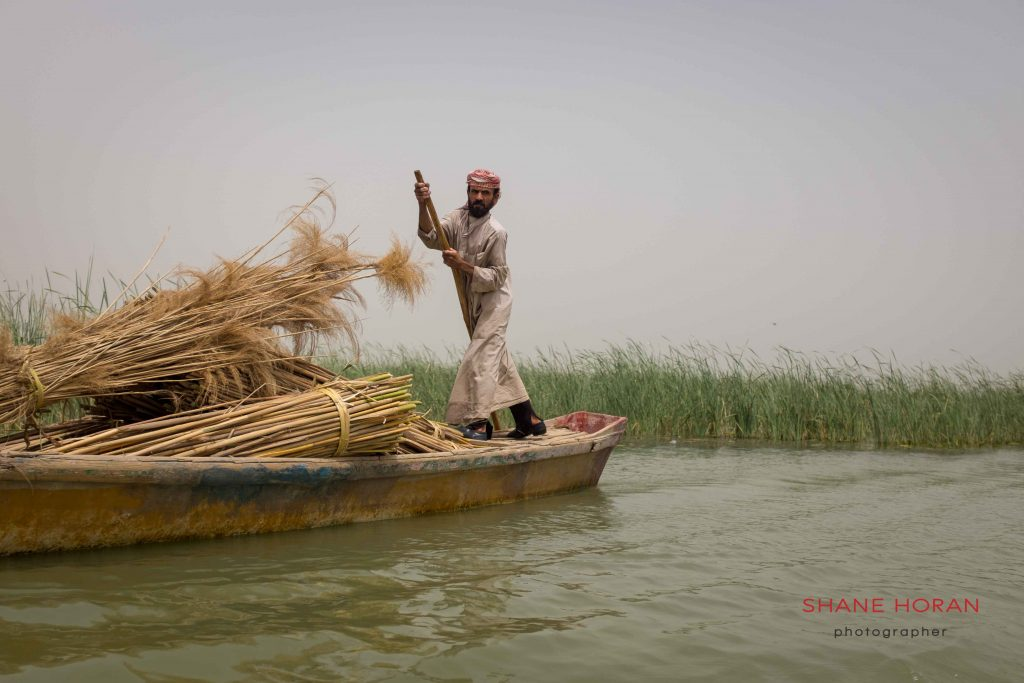 Boatman works the waterways, southern Iraqi marshlands.