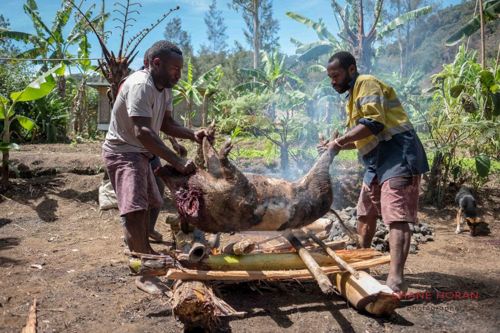Preparing a pig for lunch, Papua New Guinea