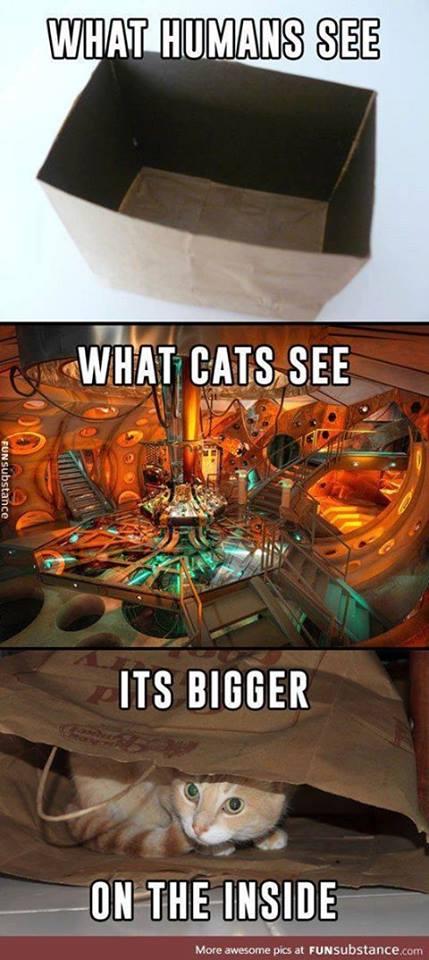 geek meme cat sees tardis
