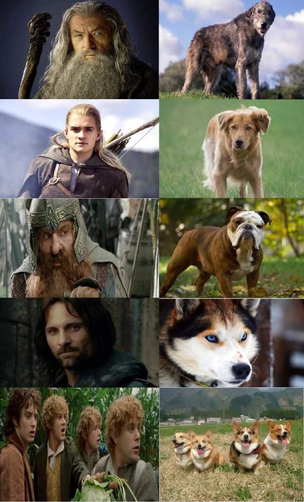d&d meme lotr dogs