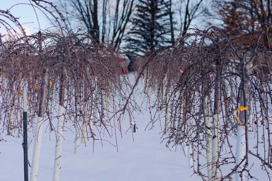 Shaner Avenue Nursery Winter 20-21