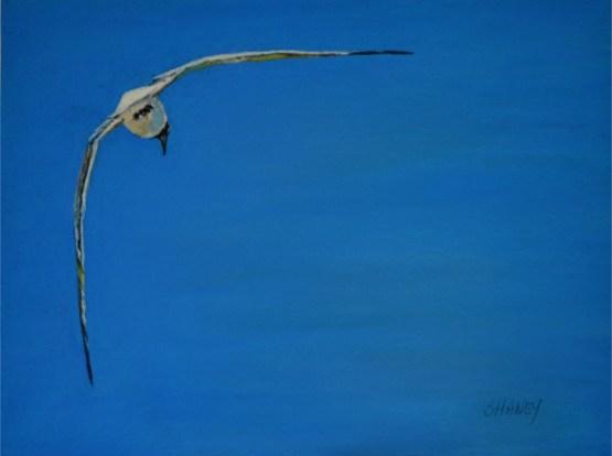 Seagull art