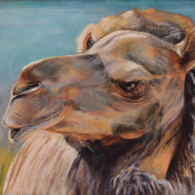 Cibelo Camel