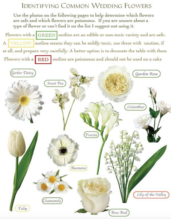 Flower Identification Guide For Cake Decorators Pdf Download Shani S Sweet Art