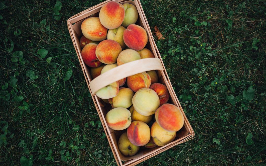 It's peach picking season