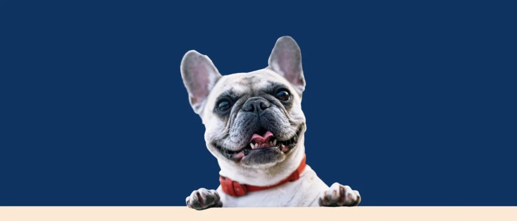 HEALTH & HAPPINESS FOR DOGS | NELSONSBOX