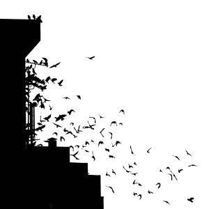 Hooded_crows_in_the_hood