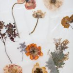Diy Pressed Flower Art Shannon Kirsten Studio