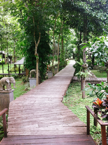 Chiang Mai jungle resort.