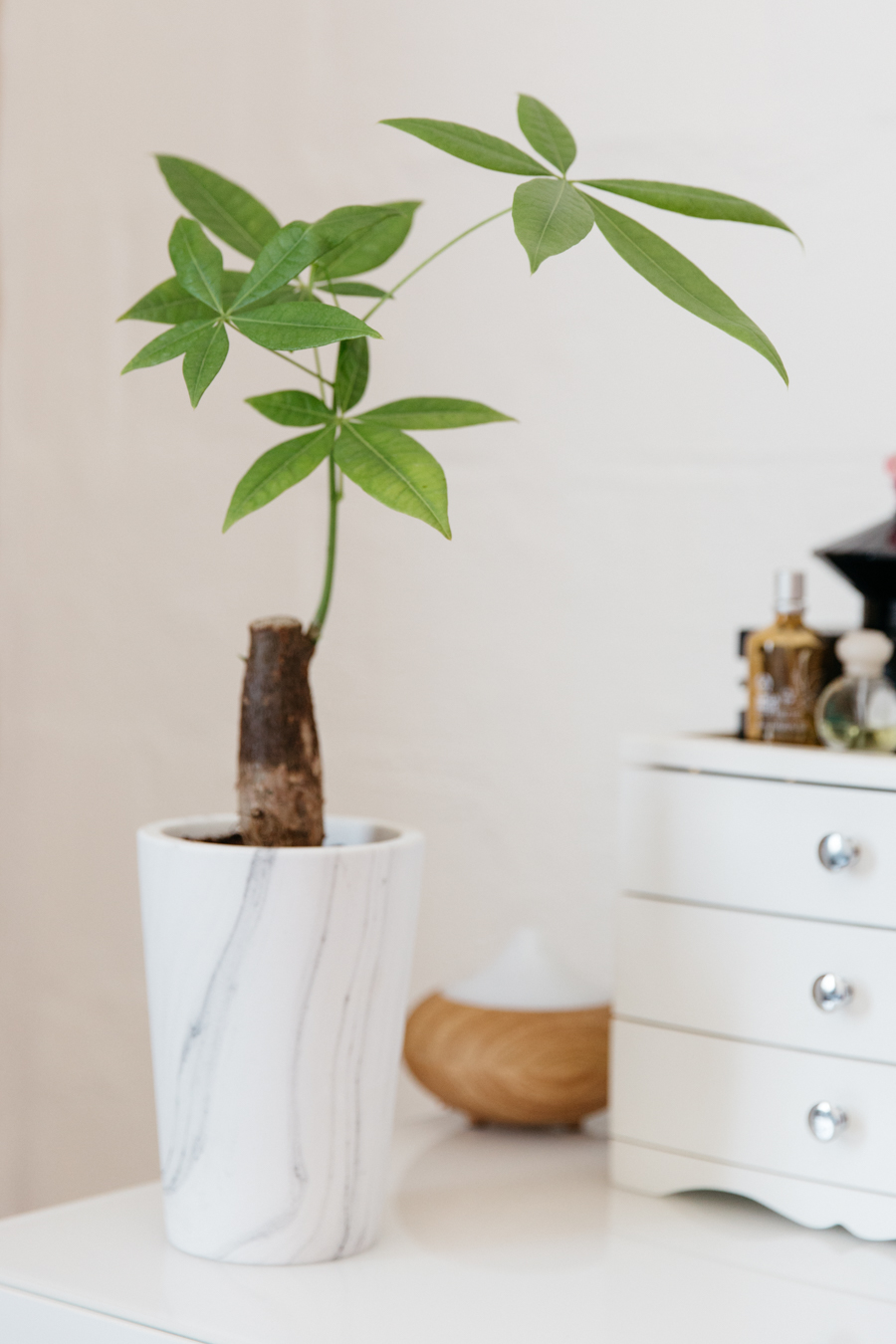 Pachira money tree on dressing table.