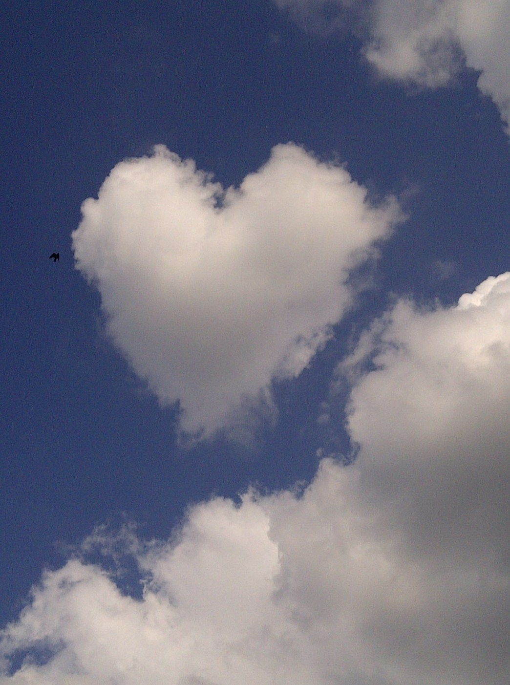 Heart Cloud