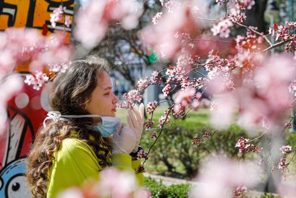 A girl removed her mask to smell the flowers on a blooming tree in Skopje, North Macedonia, on Friday. Evidence is growing that lost sense of smell and taste are peculiar telltale signs of Covid-19, the disease caused by the coronavirus.