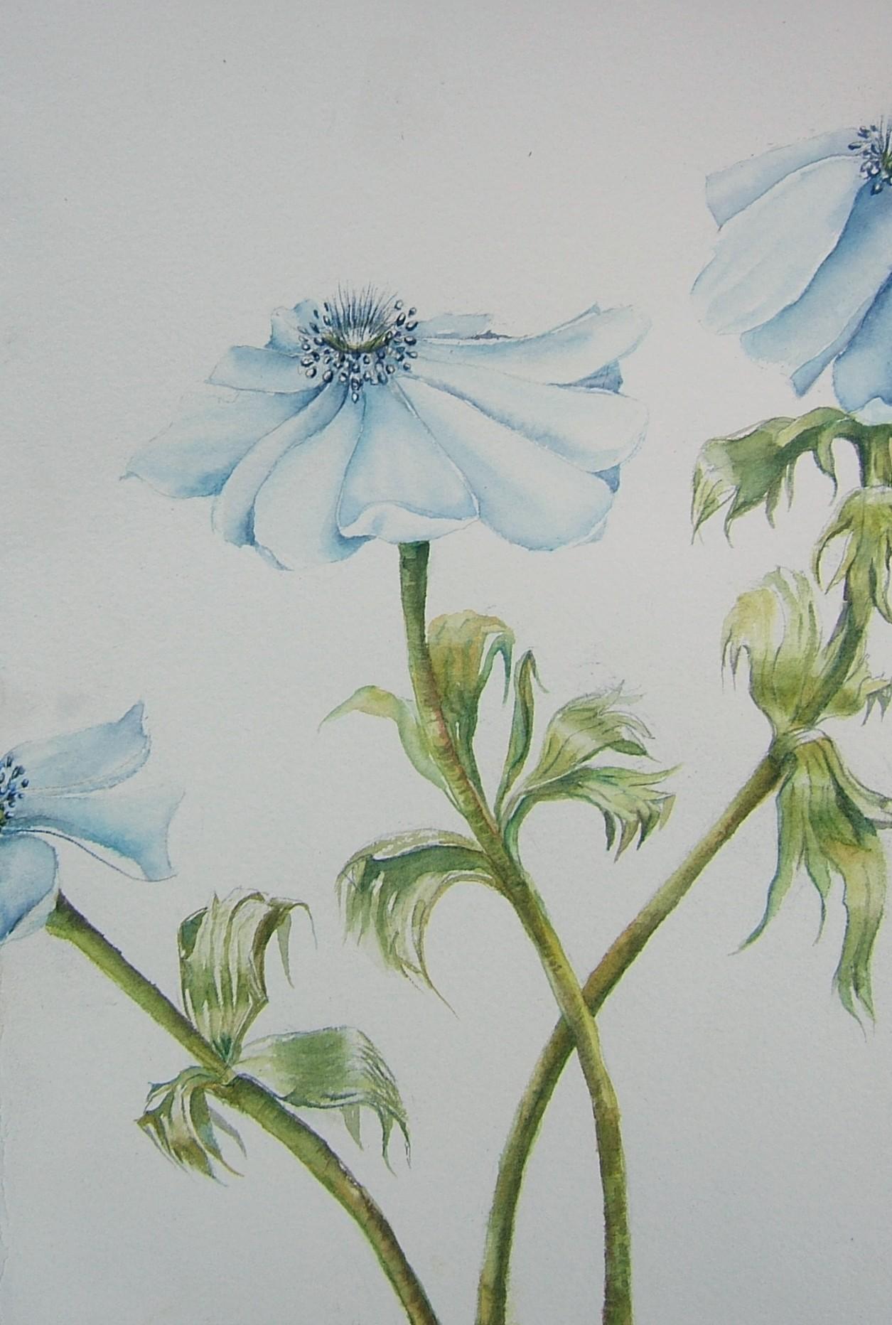 blue-aneome.jpg