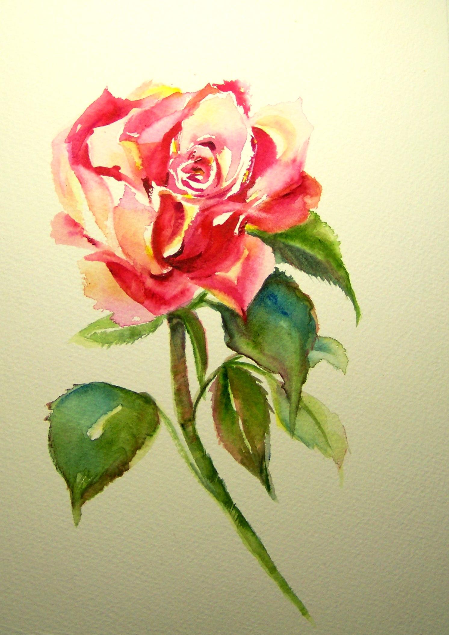 dec-rose1