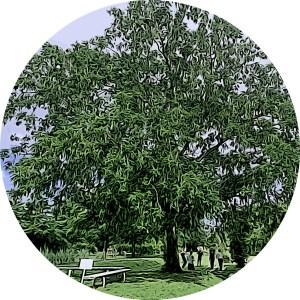 Photo du point de rdv au jardin botanique pour des séances de sport santé.
