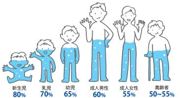 身体の水分の割合
