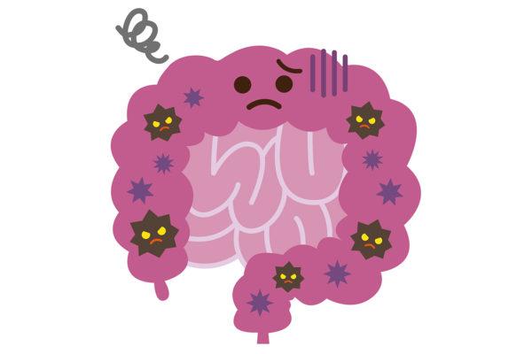 腸内環境の乱れが肥満につながる。