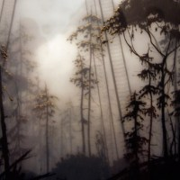 brooks shane salzwedel: by fault of it's own.