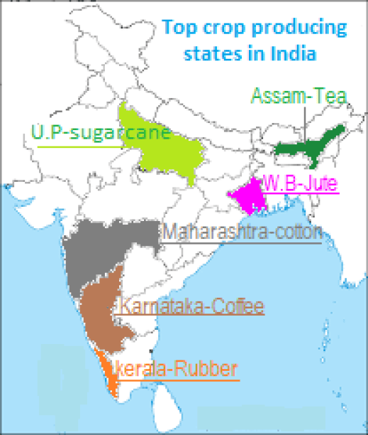 CBSE CLASS 10 TERM I GEOGRAPHY: MAP QUESTIONS FROM AGRICULTURE SOLVED