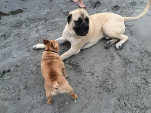 Jack playing with gentle giant, Cooper