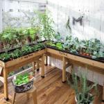 家庭菜園で初心者が育てやすい果実は?ベリー系・柑橘系がおすすめ